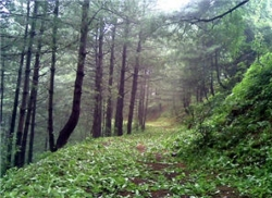 Plot for Sale Ghora Gali MURREE