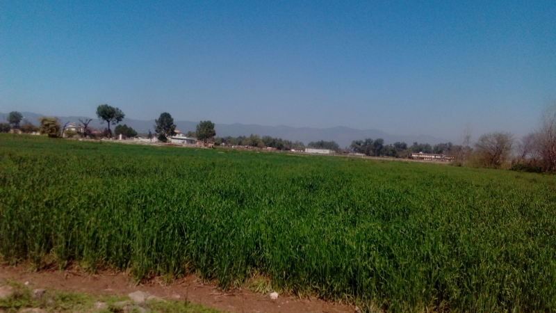 Plot Available for Sale Chak Shahzad ISLAMABAD Fields picture